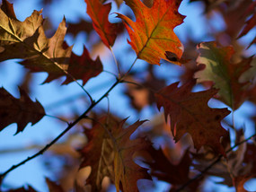 Jesienno-zimowe spowolnienie... do środka