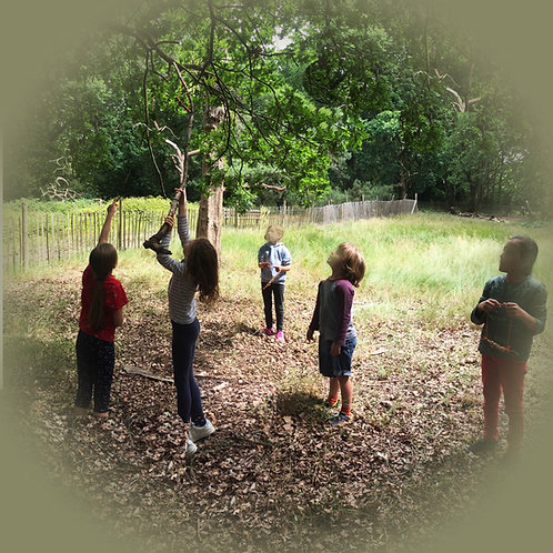 Early Summer Forest School Day