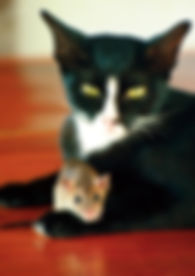 pet sitter, babá de animais