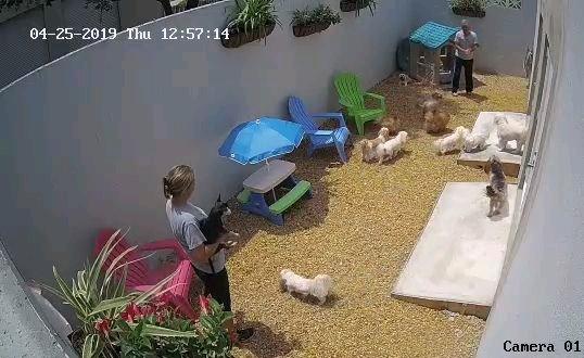 small dog yard