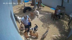big dog yard