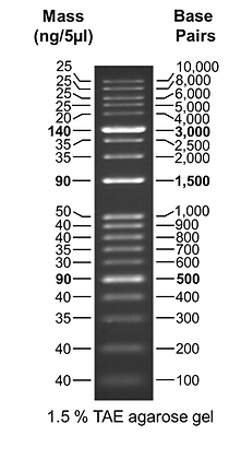 1 Kb Plus DNA Ladder