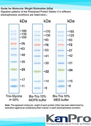 Prestained Protein Marker I (10-180 kDa)