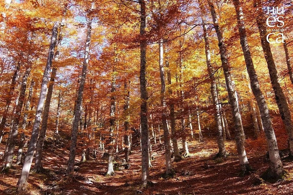 Bosque de Gamueta.jpg