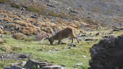 Obsevación de Fauna