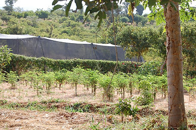 farm irrigation green house.JPG