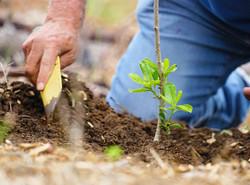 Team member reforesting