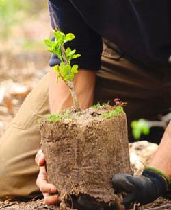 Team planting a seedling