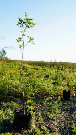 Forest resotration site - Landscape
