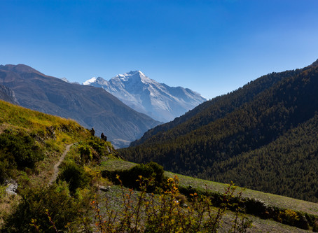 Day 11 - Trek to Tilicho Base Camp (4150m) - 8hrs