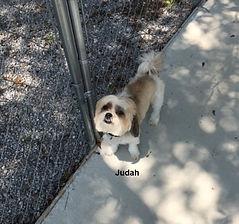 Judah2.jpeg