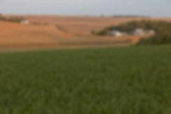 Rolling Fields.jpg