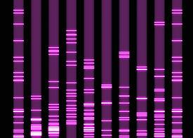 Molecular Biology sample analysis.jpg