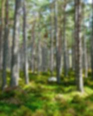 forest-272595_1280.jpg