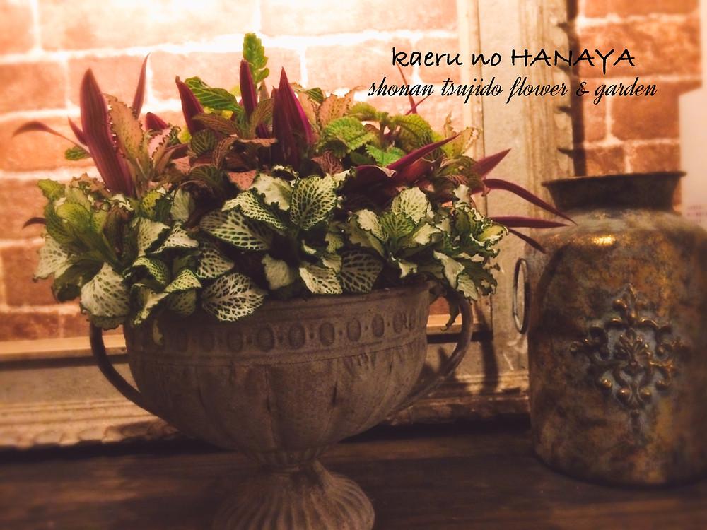 インドアギャザリング|Kaeru no HANAYA