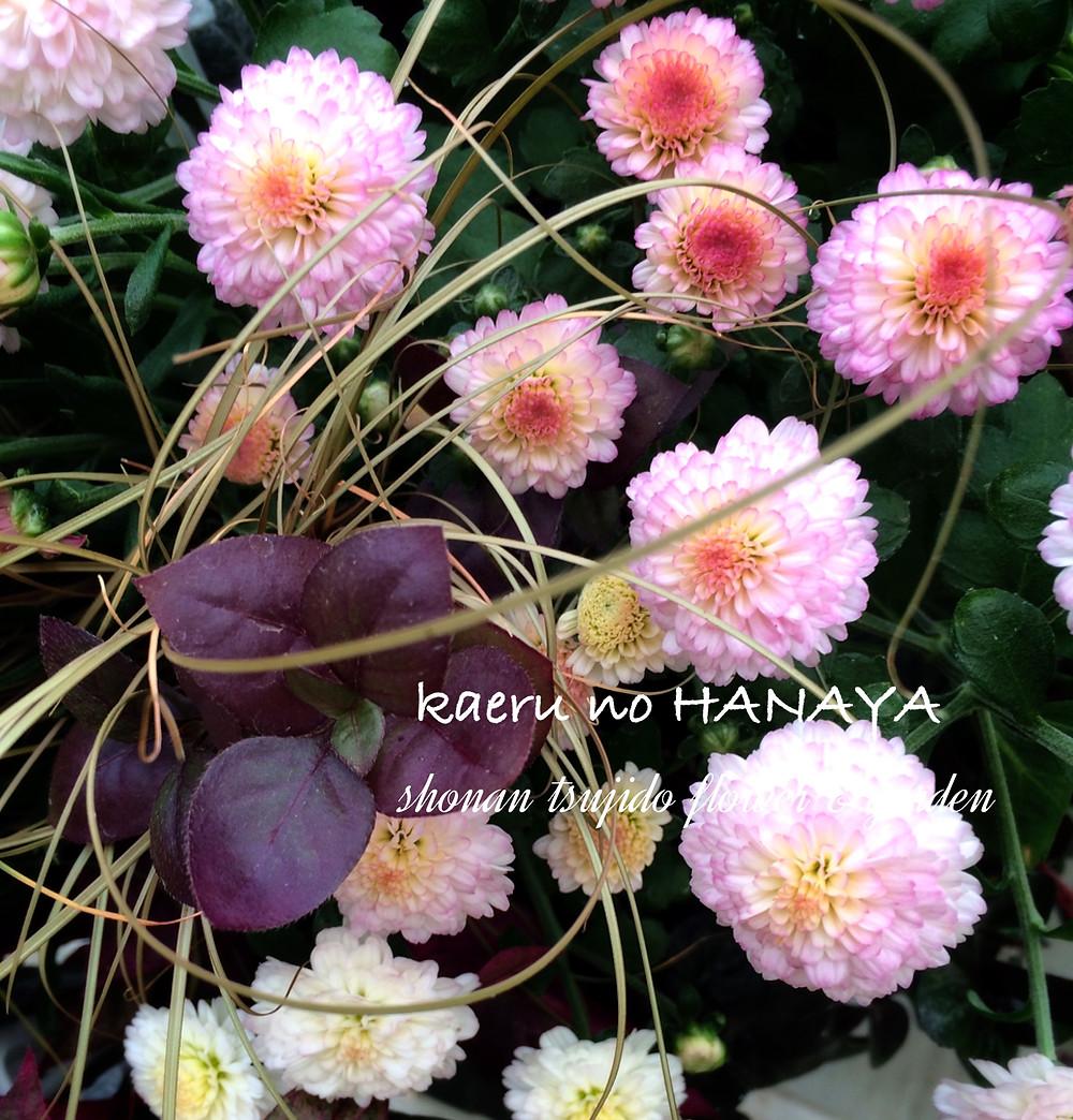ハンギングバスケット教室9月|kaeru no HANAYA