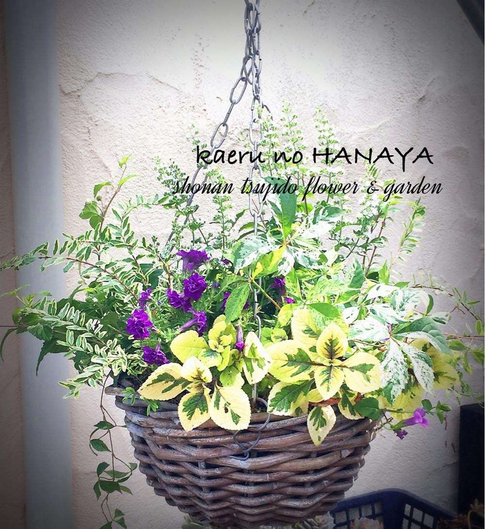 ハンギングバスケット kaeru no hanaya