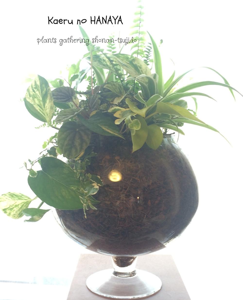 観葉植物のギャザリング