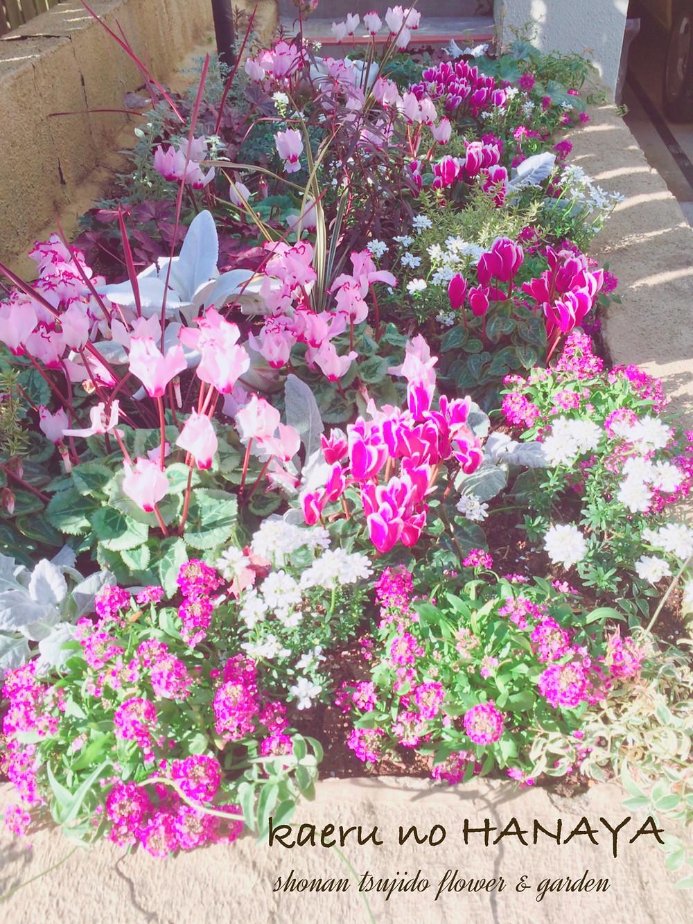 花壇の植え込み|kaeru no HANAYA