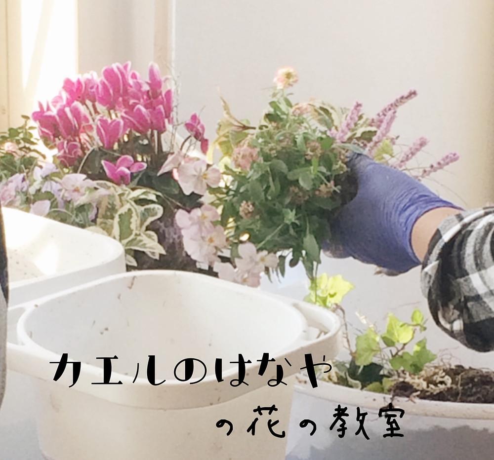 カエルのはなやの花の教室
