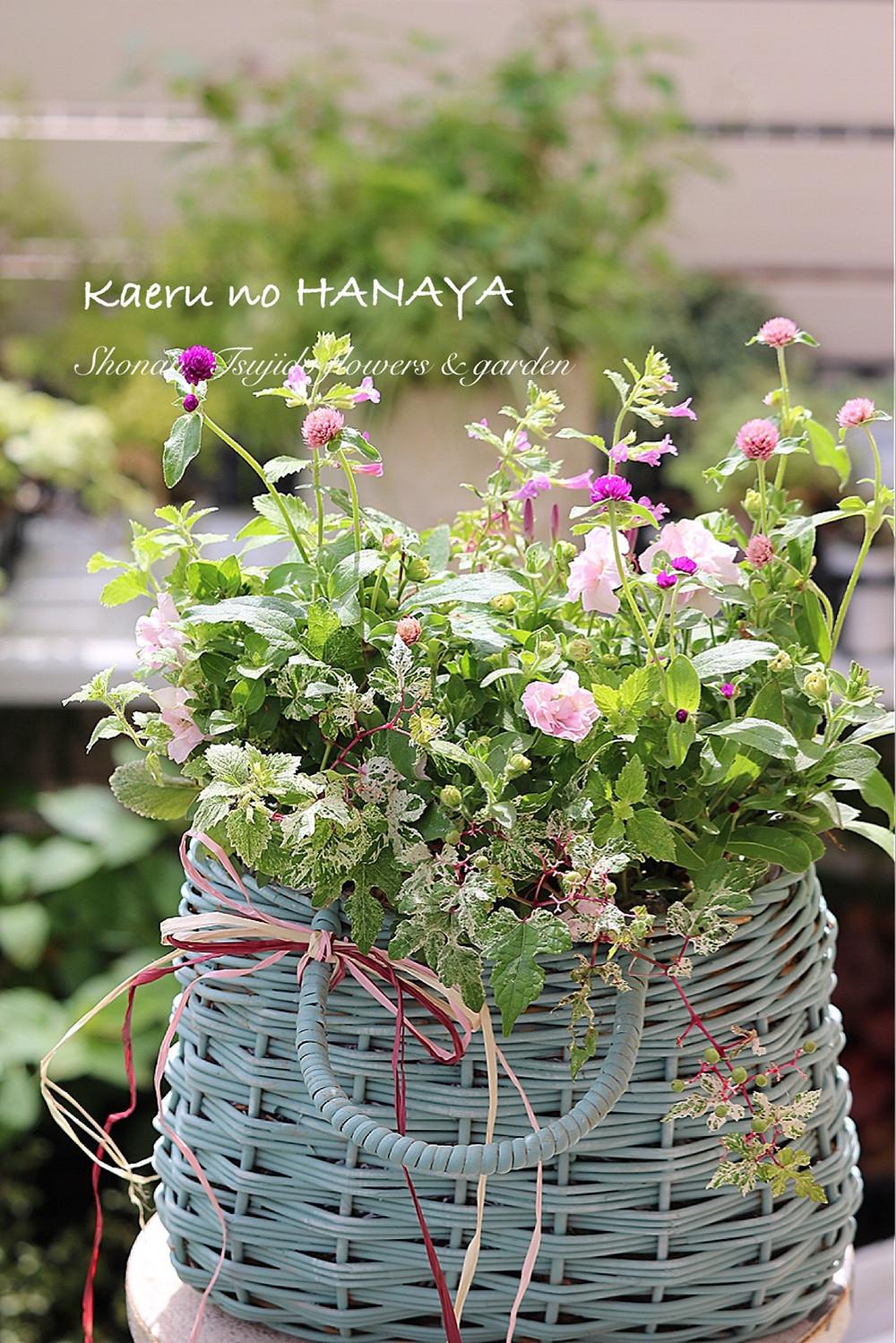 ギャザリング寄せ植え|Kaeru no HANAYA