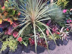 店舗の植栽