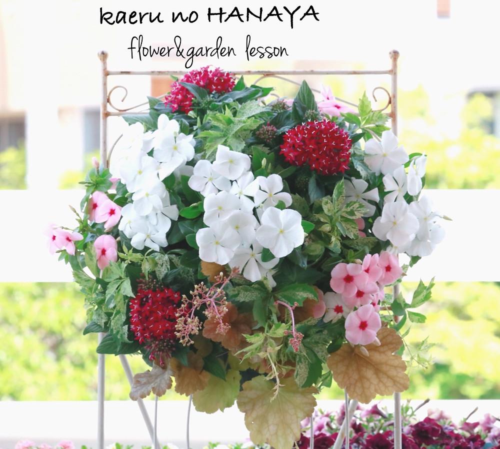 ハンギングバスケット教室見本ニチニチソウ|Kaeru no HANAYA