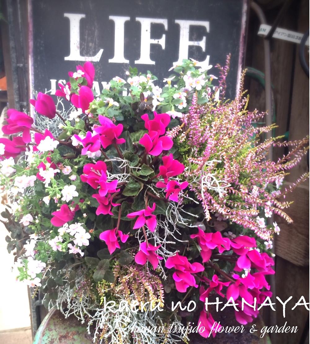 ハンギングバスケット教室10月|kaeru no HANAYA