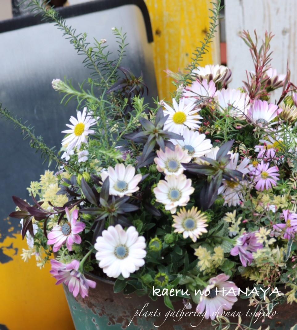 カエルのはなやの花の教室皆さんの作品