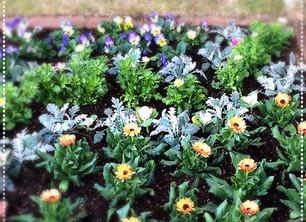 花壇の植え込みのお仕事