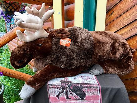 Moose! R&R 2020[4435].jpg