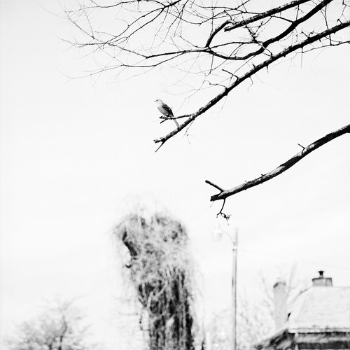 Image from 'The Levee' by Sohrab Hura