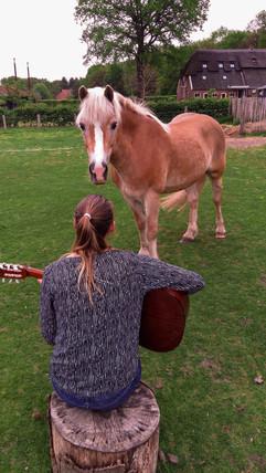 Muziek en paard