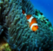 marine-life-similan-islands.jpg