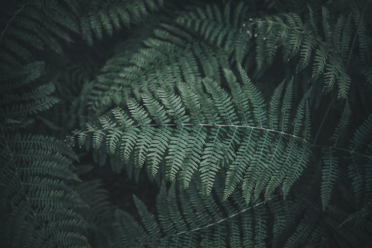 FERN BACKGROUND.jpg