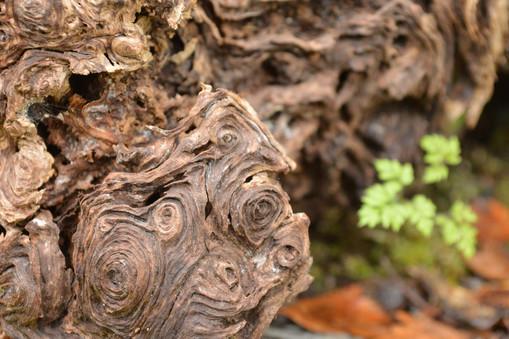 Un bosque no es sólo sus árboles, sus animales, su paisaje. Es también sus minúsculos detalles.