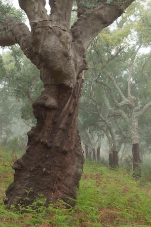 Imponentes se levantan siempre algunos árboles sobre el resto.