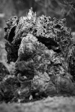 Son muchos los espíritus que habitan un bosque. Desconocidos, invisibles, olvidados.
