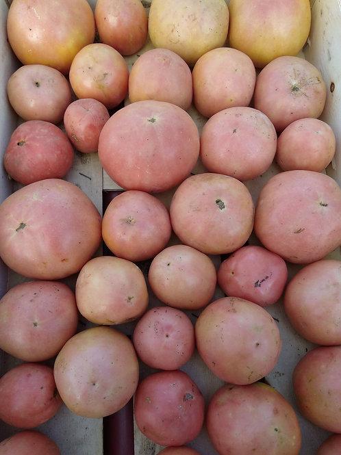 Tomates de invierno