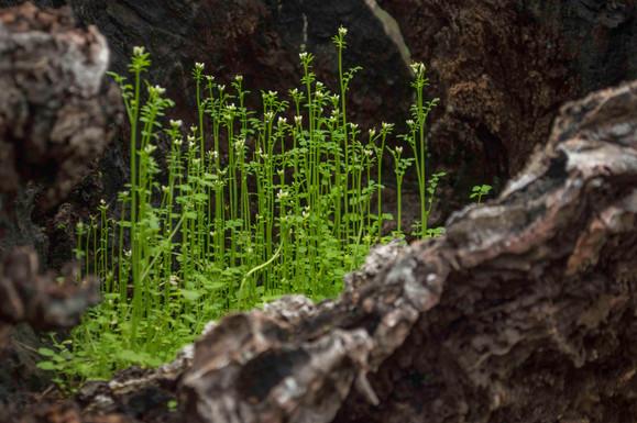 Un tronco muerto de alcornoque representa una fuente de vida. El ciclo de vida y muerte que rige la vida resulta a veces muy llamativo en un bosque.