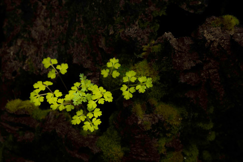 No hay más que detenerse un momento y mirar atentamente para encontrar infinidad de detalles en un bosque.
