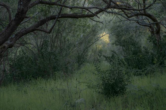 Esta imagen fue tomada en un pequeño bosque de madroños, mágico para nosotros. Quizás una puerta para entrar en sitios que aún desconocemos.