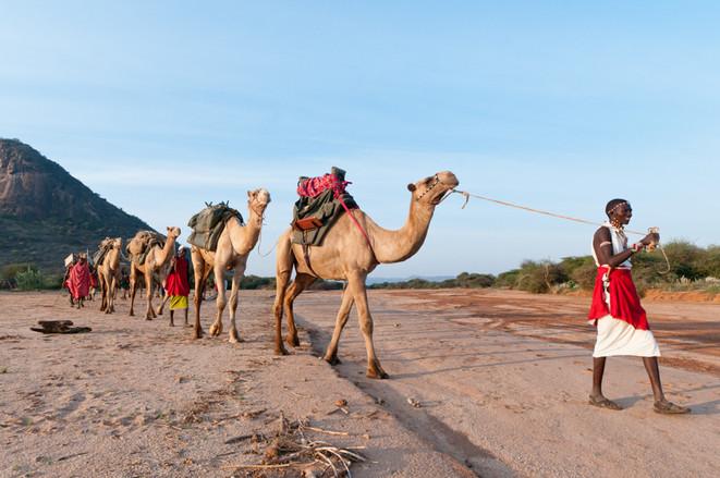 Samburu & Camels