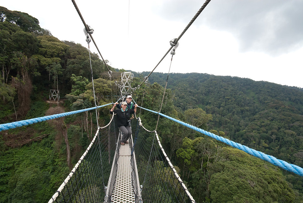 Canopy Walking - Nyungwe Forest National