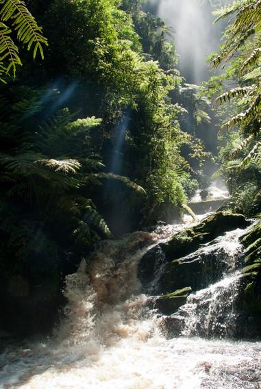 Nyungwe Forest Waterfall