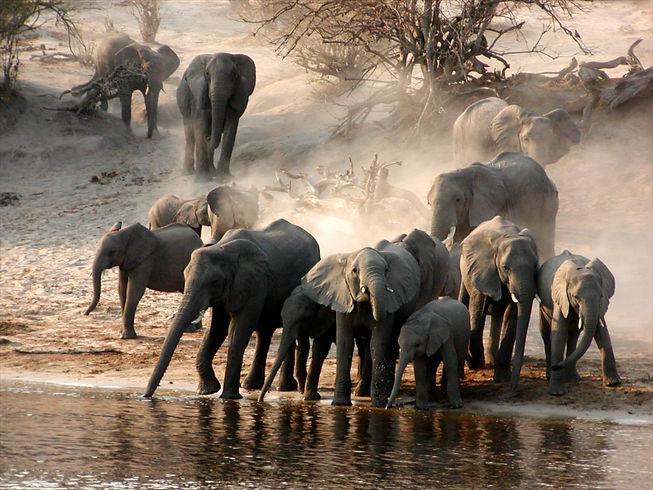 Elephants, Ruaha, Tanzania.jpg