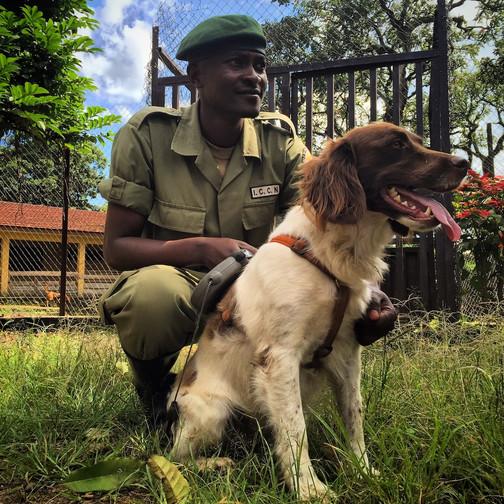 Virunga congo-hound anti-poaching unit