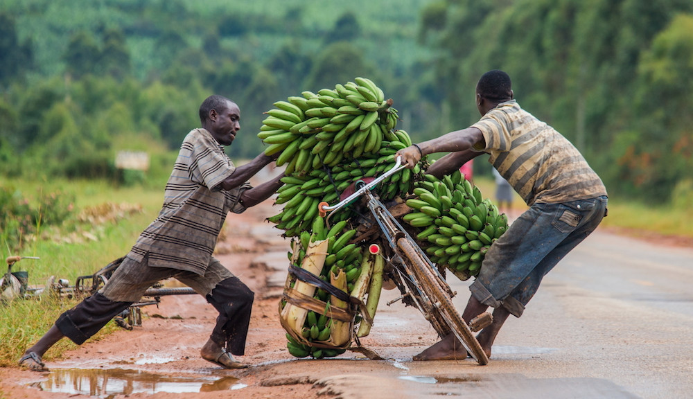Kisoro - Banana Bicycle to Market
