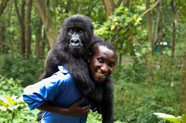 Senkwekwe Gorilla Orphan