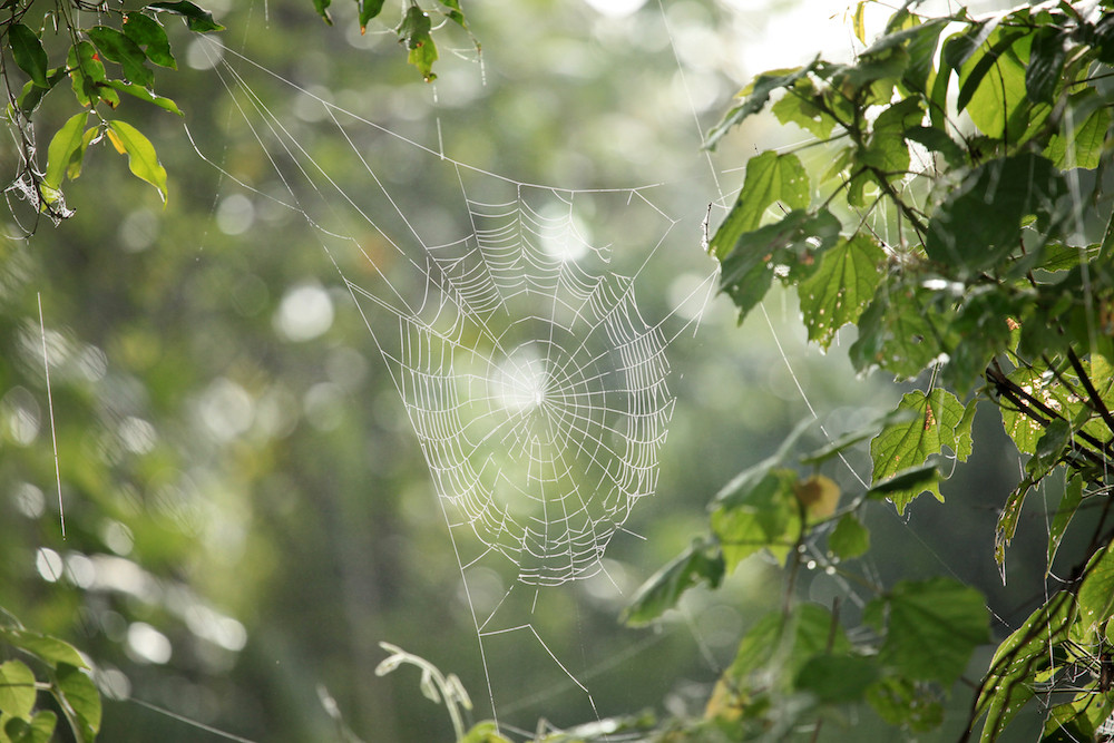 Spider web in Rwenzoris
